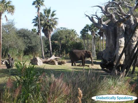 Animal Kingdom Elephant 2011